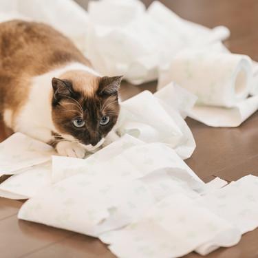 猫用オムツのおすすめ7選!嫌がる猫への付け方も紹介