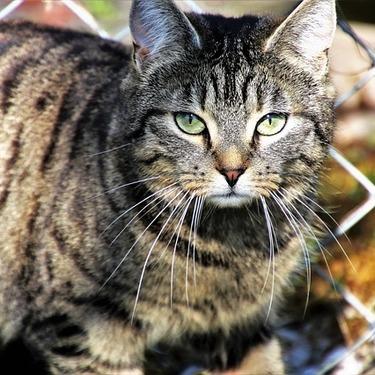 猫の外飼いは迷惑なの?猫の外飼いのメリット・デメリットを紹介!