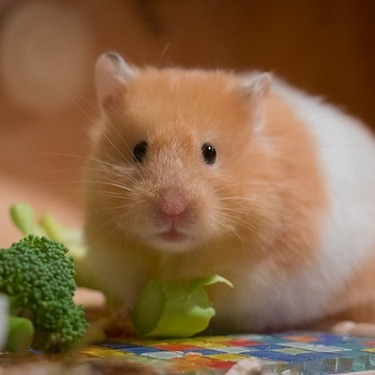 ハムスターの噛み癖を直そう!ケージを噛むのを止めさせる対策を紹介
