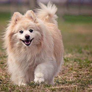 犬のレーキングって何?メリットや料金の相場・ブラシについて紹介!