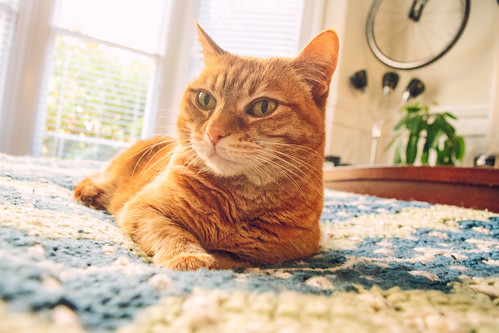 猫のおすすめの暑さ対策10選を紹介!対策グッズで暑い夏を乗り越えろ