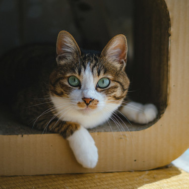 猫パンチの威力とスピードを紹介!猫パンチは侮れない・・