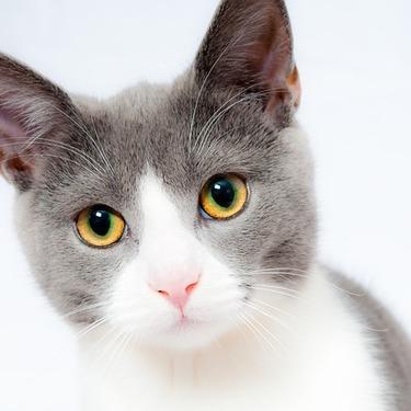 猫が腕枕で一緒に寝る意味・理由を紹介!愛情の証?