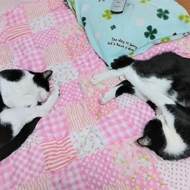 猫がニャンモナイトする理由3選!猫が丸くなって寝る意味は?