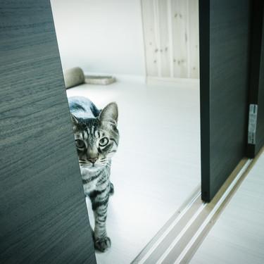 猫がお風呂場までついてくる理由をご紹介!分離不安とは?