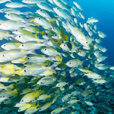 魚の数え方は「匹」「尾」?魚の数え方と単位をご紹介!