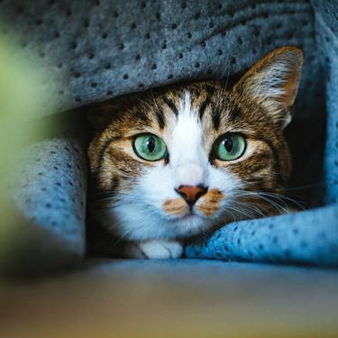 猫にトリミングは必要?自宅でのやり方と任せる場合の相場の料金を紹介!