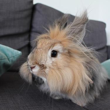 【画像あり】アンゴラウサギの値段は?種類・値段・飼育について紹介!