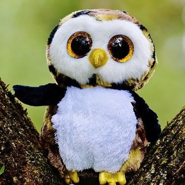フクロウって賢いの?フクロウの知能についてエピソード付きで紹介!