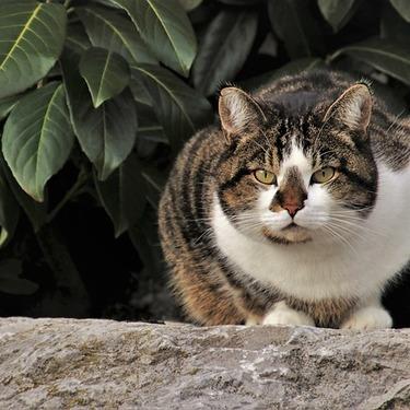 【猫よけ用】唐辛子スプレーの作り方と自作したスプレーの効果的な使い方を紹介!