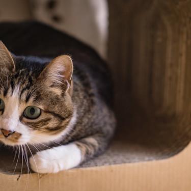 猫のしっぽが膨らむメカニズムとその時の気持ちとは?怒ってる?