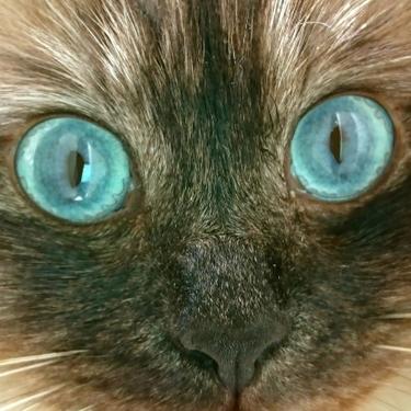 猫の視力はどのくらい?暗闇でも見える?動体視力は高い?