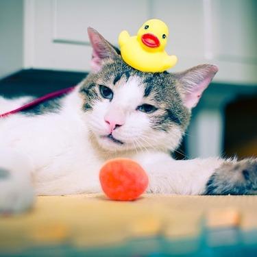 猫用のシャンプーのおすすめ10選をご紹介!猫用シャンプーのメリットは?