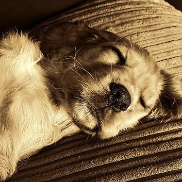 犬が目を開けて寝るのは大丈夫?寝相で分かる犬の心理を紹介!