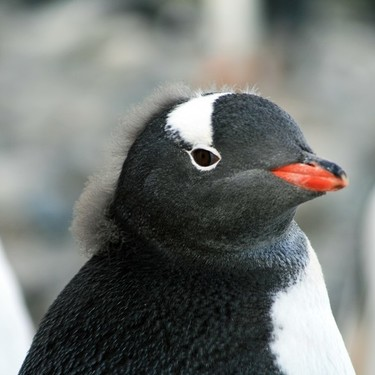 ペンギンの数え方の単位は「羽」それとも「匹」?