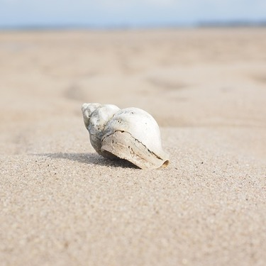 貝の数え方の単位をご紹介!【アワビ/牡蠣/英語の数え方】
