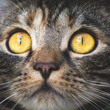 猫に世界はどう見えている?猫の色覚・視野についてご紹介!