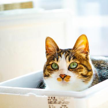 猫がストーカーのようについてくる理由を紹介!【同じ部屋/トイレ/お風呂/寝る時】