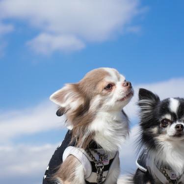 大型犬・中型犬・小型犬の1日の散歩の回数と時間の目安をご紹介!