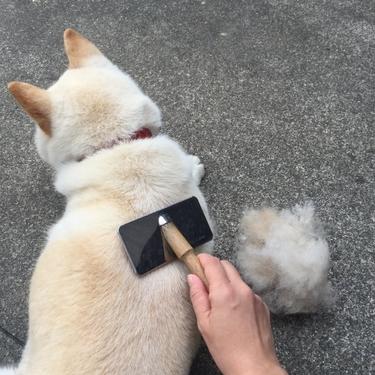 犬用ブラシのおすすめランキングTOP5を紹介!【抜け毛/種類/手袋】