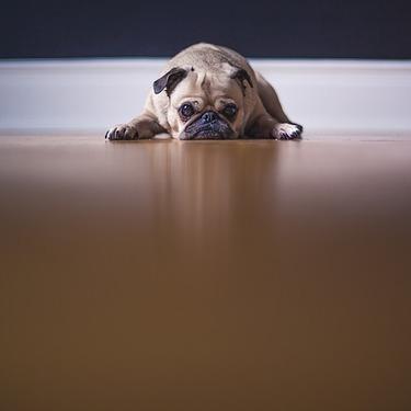 おとなしい犬の種類は?おとなしい犬種ランキングを紹介【小型犬/中型犬/大型犬】