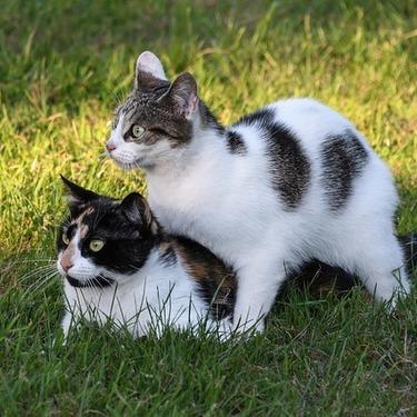 失敗したくない猫の多頭飼い!二匹飼いする場合の準備・注意点を紹介