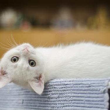 猫のストレスサインを紹介!原因・対策・解消法をご紹介