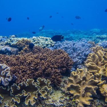 ドブ貝・カラス貝の飼い方・飼育のポイントをご紹介!【二枚貝/餌/産卵/繁殖】