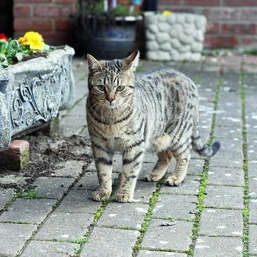 「どら猫」の意味とは?野良猫との違いをご紹介!