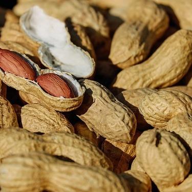 猫にピーナッツを与えても大丈夫?成分と与えすぎた場合の危険性を紹介!