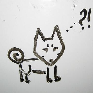 バセンジーとはどんな犬?画像・値段・飼い方をご紹介!
