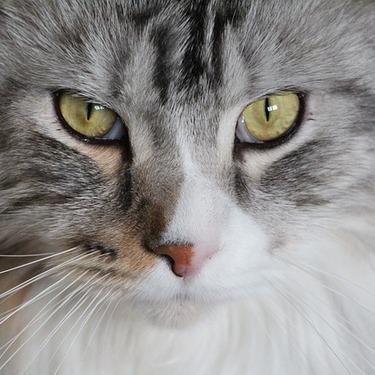 大型猫におすすめの人気のキャットタワー5選を紹介!【メインクーン/ノルウェージャン】