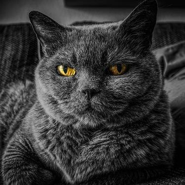 猫に海苔を与えても大丈夫?量の目安やなぜ猫が海苔を好きなのか紹介!