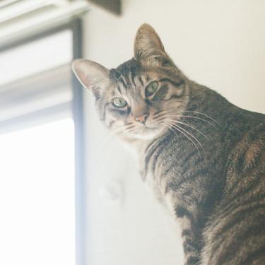 目指せ猫モテ!猫に好かれる人の特徴とモテるための方法をご紹介!
