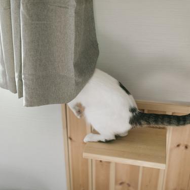 猫のお尻歩きの原因は肛門腺のつまり?肛門腺をチェックするには?
