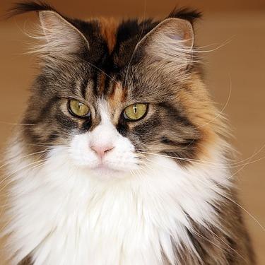大型の猫用のケージのおすすめ5選をご紹介!【人気/大きい/おしゃれ】