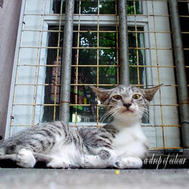 おしゃれな猫用のケージのおすすめ5選を紹介!【木製/レイアウト】