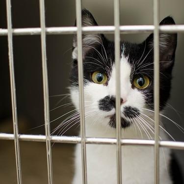 スリムな猫用のケージのおすすめ5選をご紹介!