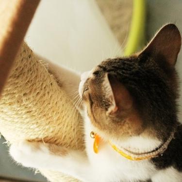 猫の爪とぎグッズのおすすめ10選を紹介!【爪とぎ器/人気】
