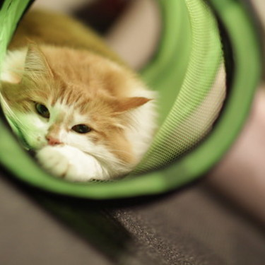 猫用のトンネルのおすすめ10選を紹介!【おしゃれ/おもちゃ/IKEA】