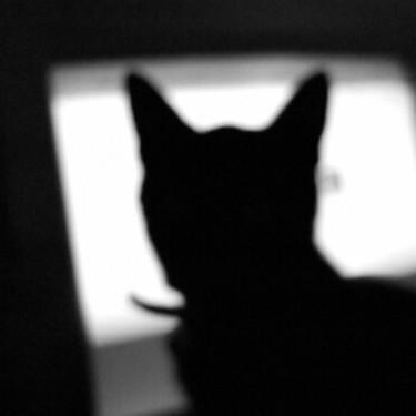 ハイランドリンクスとはどんな猫?値段・性格・寿命について紹介!