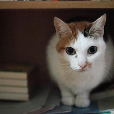 猫が猫砂を食べてしまう原因と対策をご紹介!