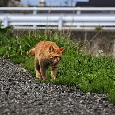 猫の散歩にリードは必要?リードの選び方やおすすめのリードを紹介!