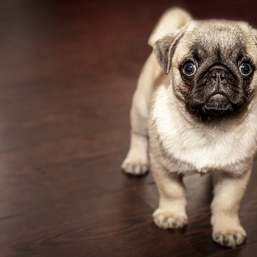 ペットの犬用フローリングマットのおすすめ10選を紹介!【滑り止め/防水】