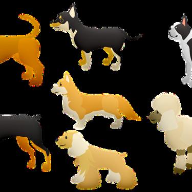 大型犬へのおもちゃのおすすめ5選を紹介!丈夫&頑丈なおもちゃのおすすめは?