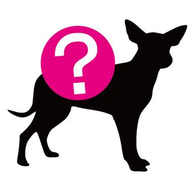シュナプーとはどんな犬?ミックス犬「シュナプー」の性格・値段をご紹介!
