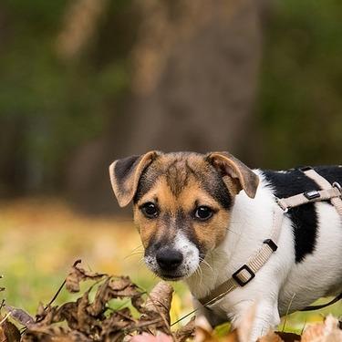 犬用の食器のおすすめ10選を紹介!【おしゃれ/早食い防止】