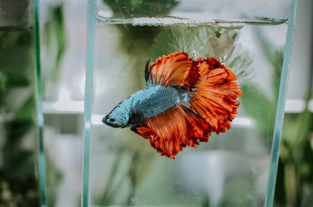 【風水】運気が上がる魚の種類は?水槽の置き場所のおすすめも解説
