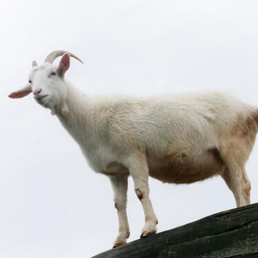 山羊 座 a 型 男性