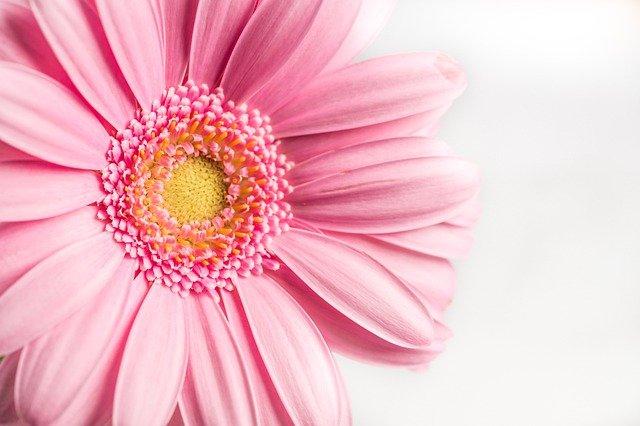 ピンクの財布は風水で運気があがる?恋愛運・金運アップにいい!